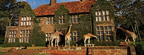 giraffe-manor1